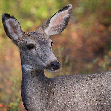 Mule Deer by w1ldsnaps