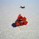 Lost Flower by Chanzz