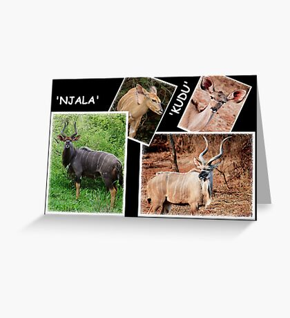 """A  COLLAGE OF THE """"NJALA"""" and the """"KUDU""""  Greeting Card"""