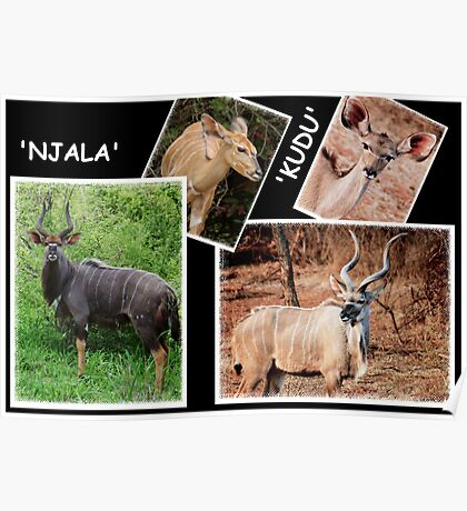 """A  COLLAGE OF THE """"NJALA"""" and the """"KUDU""""  Poster"""