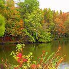 Fall Colors at the Lake by debbiedoda