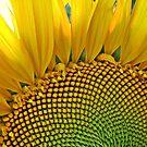 Yellow beauty. by rasim1