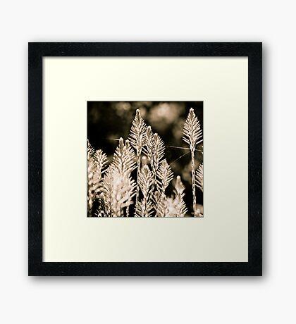back lit Framed Print