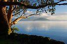Rotorua's Morning Glow by Michael Treloar