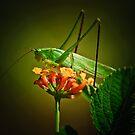 Grasshopper by Phillip M. Burrow