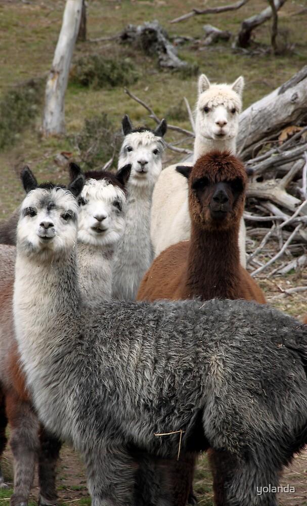 Alpaca Gang by yolanda
