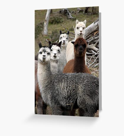 Alpaca Gang Greeting Card