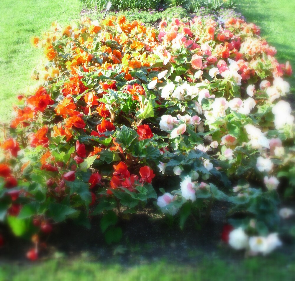 Just a Little Flower Bed by flyprincess
