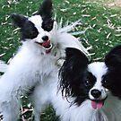 Papillions Puppies by JuliaKHarwood