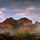 Low lying fog by Linda Sparks