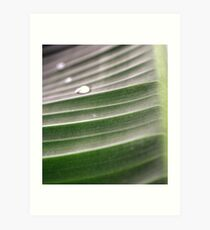 Raindrop 2 Kunstdruck
