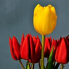 Red and Yellow Tulips by Tom Mostert