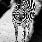 Zebra B&W by ser-y-star