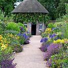 A Garden of Colour by hootonles