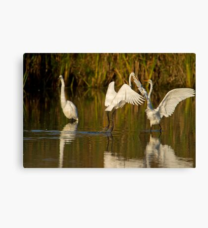 A Greeting of Sorts Canvas Print