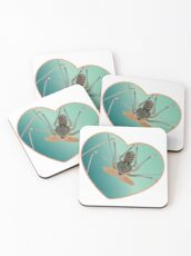 Amblypygi love - Acanthophrynus coronatus Coasters