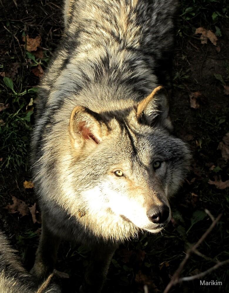 Timber wolf by Marikim
