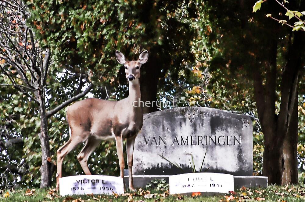 Cemetery guard by cherylc1