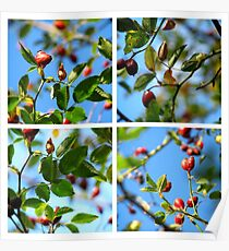 Rosehips - Polyptych Poster