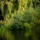 Classic Water Scene by Matt Sillence