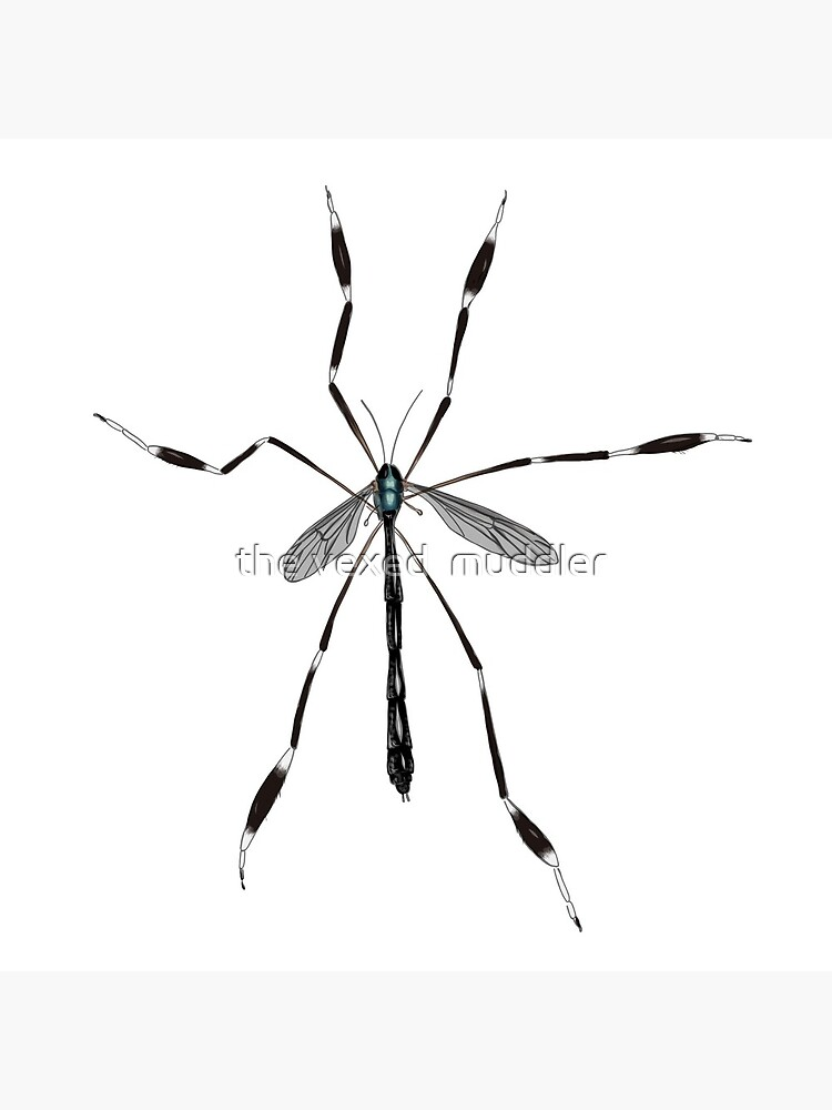 Phantom crane fly - Bittacomorpha clavipes by thevexedmuddler