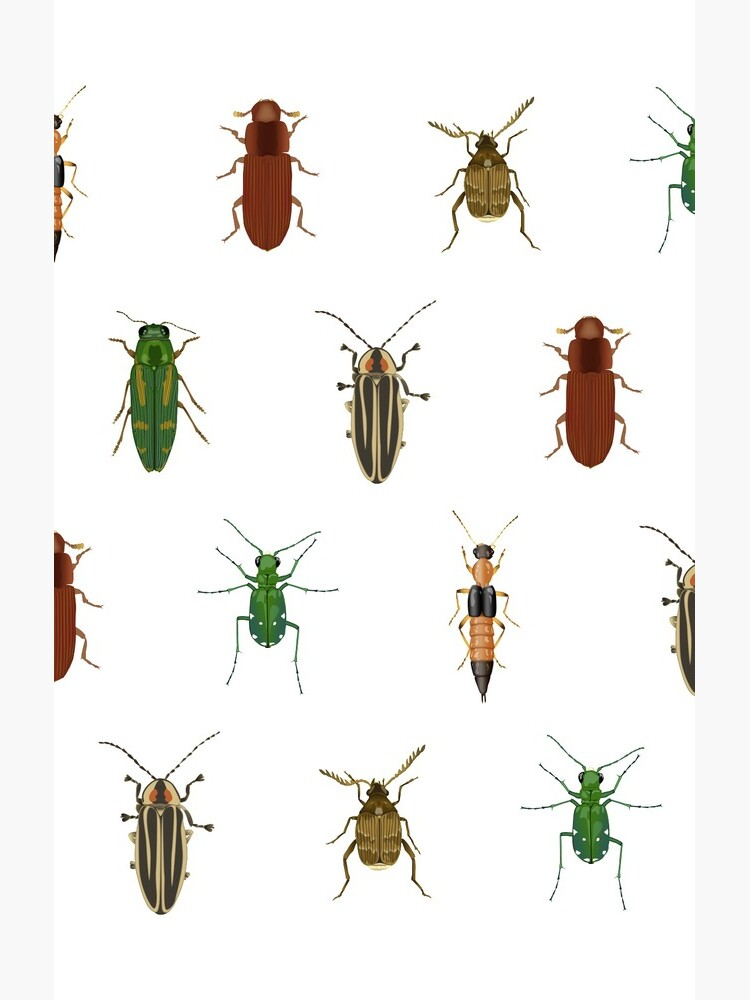 Four Beetles by thevexedmuddler