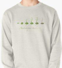 A. thaliana development Pullover Sweatshirt