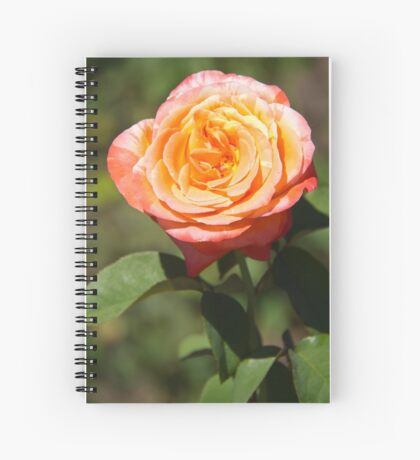 Orange Rose with Pink Edges Spiral Notebook