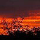 Fiery Autumn Sunset by Dee Belanger