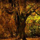 It's not the Angel Oak by Susanne Van Hulst