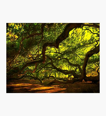 Side arms of the Angel Oak in Charleston Photographic Print