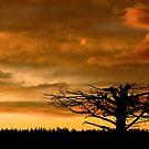 Sunrise for the departed by Belinda Osgood