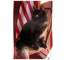 The Patriotic Cat Poster