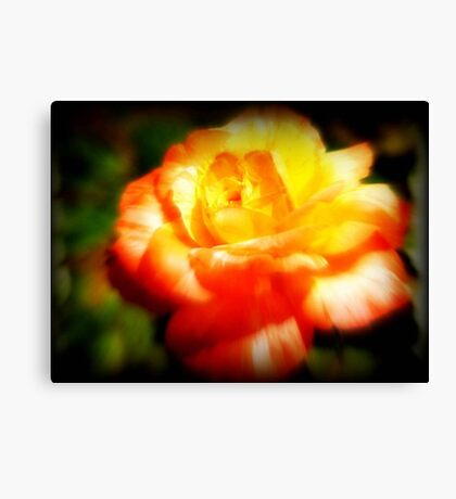 The Last Rose Stands Alone ©  Canvas Print