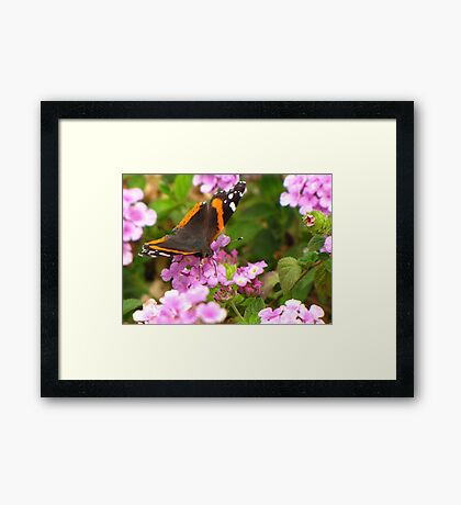 Butterfly ~ Red Admiral II Framed Print