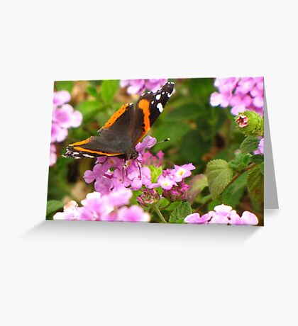 Butterfly ~ Red Admiral II Greeting Card