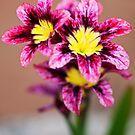 Harlequin Flower by Malcolm Garth