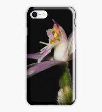 Caladenia latifolia    iPhone Case/Skin