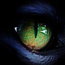 Night Stalker by Jon Staniland