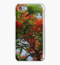 THE ROYAL POINCIANA TREE iPhone Case/Skin