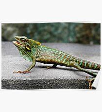 Green Crested Lizard (Color change), Bronchocela cristatella Poster