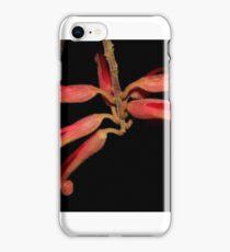 Grevillea miqueliana  iPhone Case/Skin