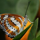 In The Orange Tree by Gary Fairhead