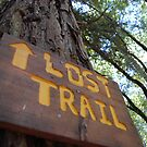 Not so lost lost trail. by Amanda Huggins