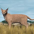 Caracal by Walter Colvin