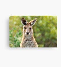 Wild Thing - Australian Kangaroo Canvas Print