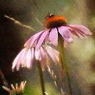 Bee on top by vigor