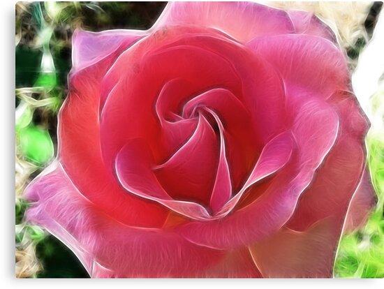 The Breast Cancer Rose by Brenda Boisvert