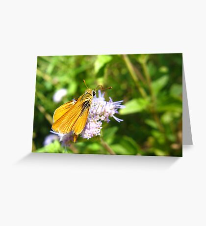Butterfly ~ Orange Skipperling Greeting Card