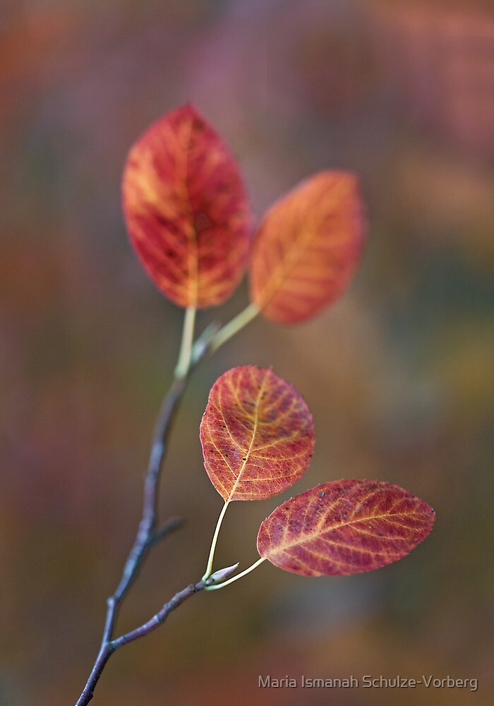 Colour my life by Maria Ismanah Schulze-Vorberg